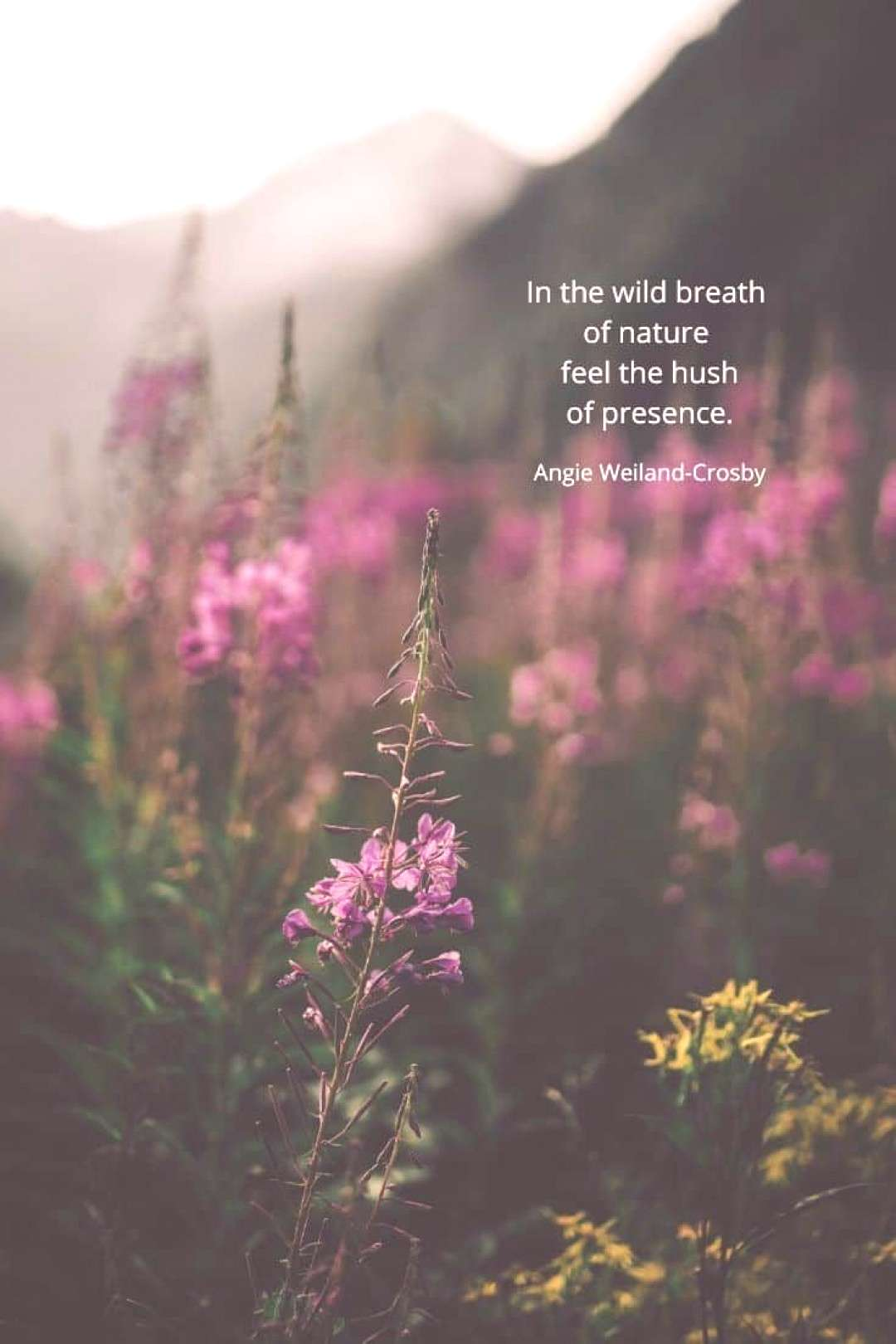 12 Ways to Vibe with Your Inner Wild Nature Child inspirational nature quotes | nature peace quotes