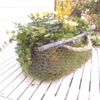 An unusual container which looks as if it is made from chicken wire with a metal edging strip and a