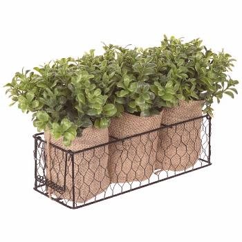 Get Boxwood Containers In Chicken Wire Basket online or find other Floral Arrangements products fro