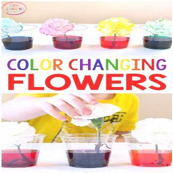 I just love this color changing flowers science experiment! It's a fun spring science activity for