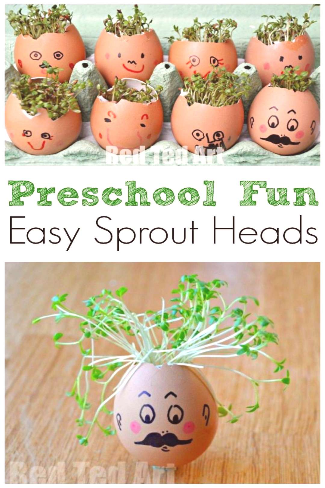 Easy Preschool Activity for Spring. Preschool STEAM activity. Cress heads how to. Sprout heads.