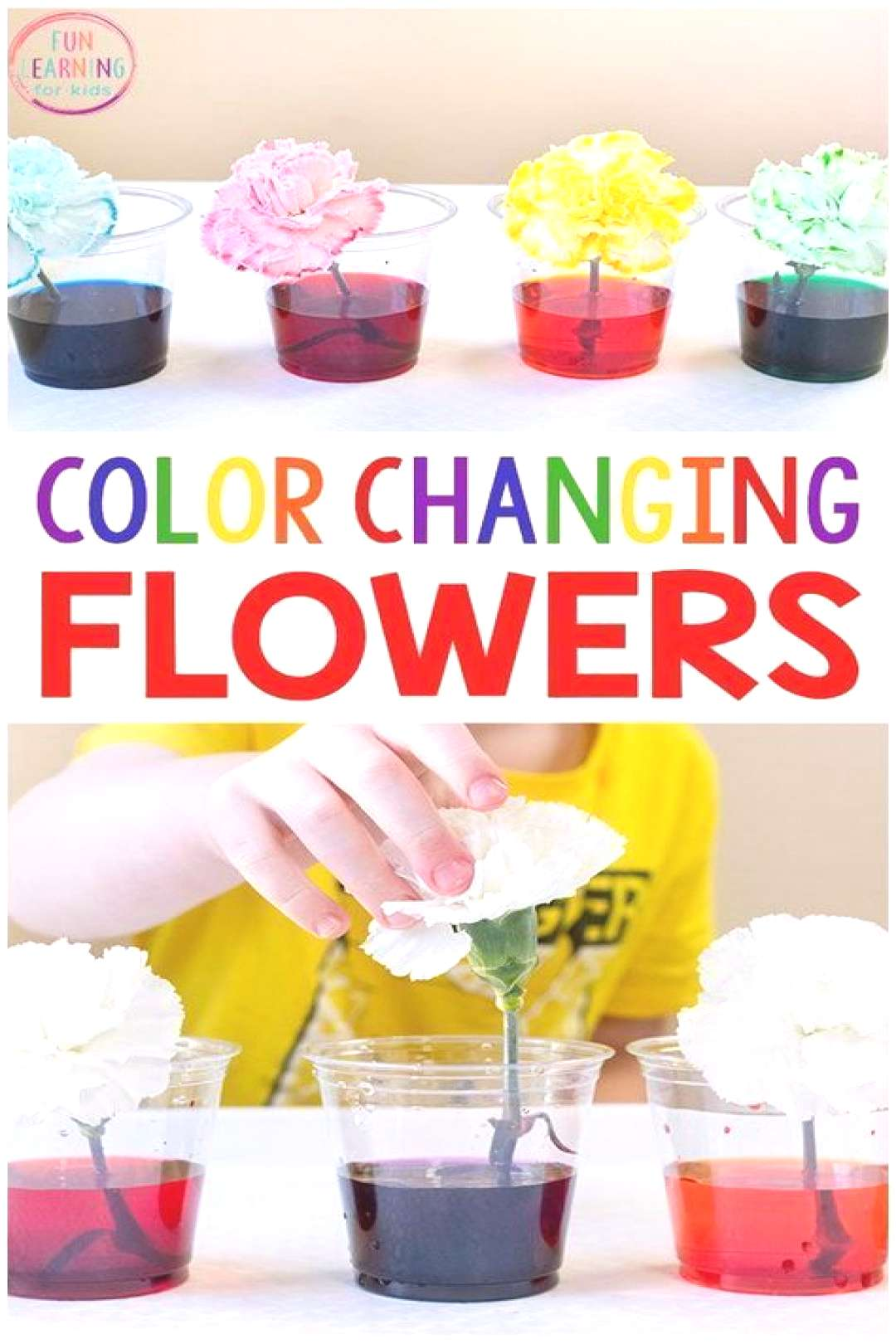 I just love this color changing flowers science experiment! Its a fun spring science activity for