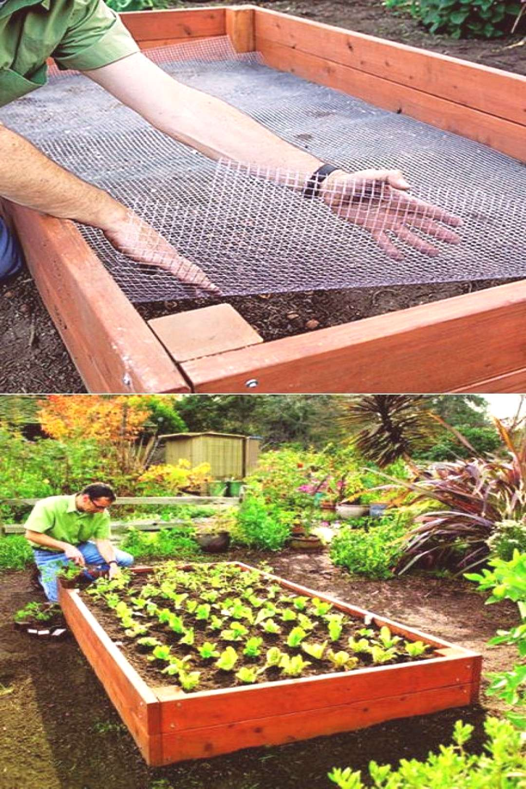 Line your raised bed with chicken wire to keep out gophers and moles! | My-FavThings | Bloglovin'